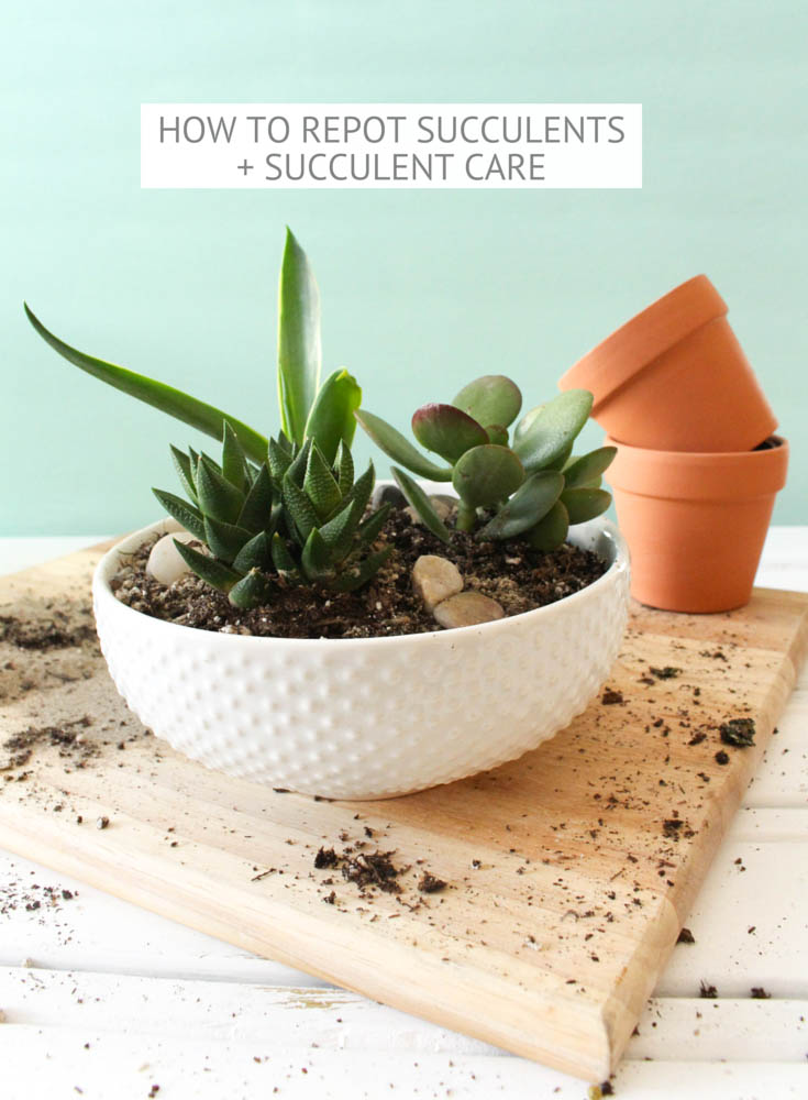 How To Care Succulent Plants Garden Inspiration